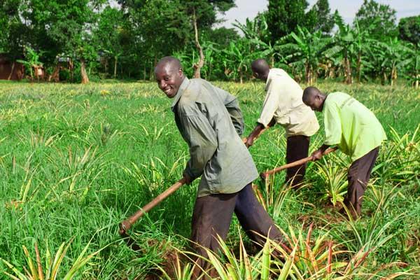 distribution-kits-agricoles-centrafrique